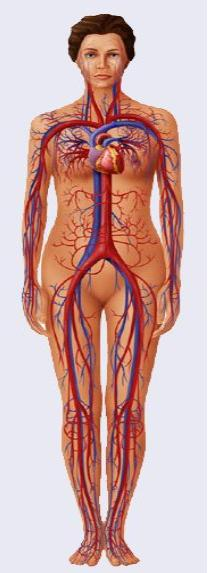 Cardiovascular OSCEs